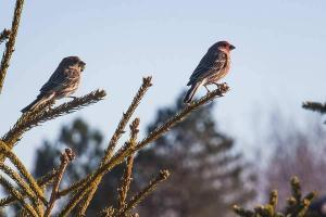 Birding or birdwatching is the practice of observing birds in their natural environment.